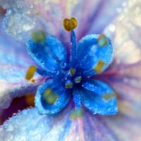 Glass Hydrangea