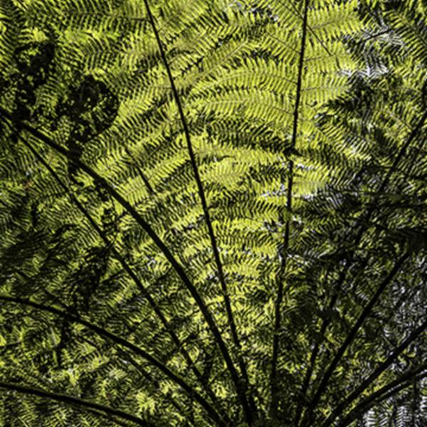 under a fern canopy.jpg