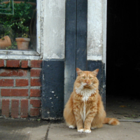 Tigger the Flower District Cat, 28th Street
