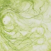 Algae Slide 3